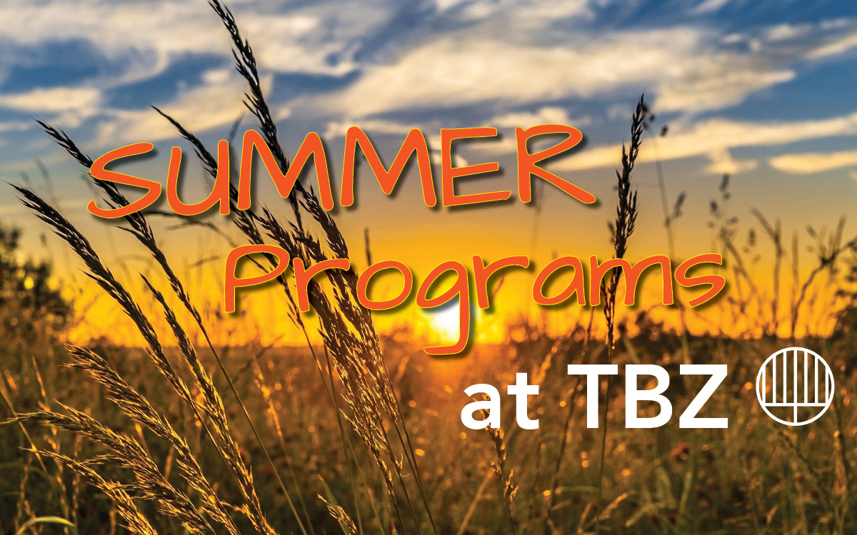 """<a href=""""https://tbzspring2021programming.wordpress.com""""                                     target=""""_blank"""">                                                                 <span class=""""slider_title"""">                                     So much happening at TBZ this Summer!                                </span>                                                                 </a>                                                                                                                                                                                       <span class=""""slider_description"""">Visit TBZ's Programming website for more information on how to learn and stay connected to our community!</span>                                                                                     <a href=""""https://tbzspring2021programming.wordpress.com"""" class=""""slider_link""""                             target=""""_blank"""">                             Click here for more                            </a>"""