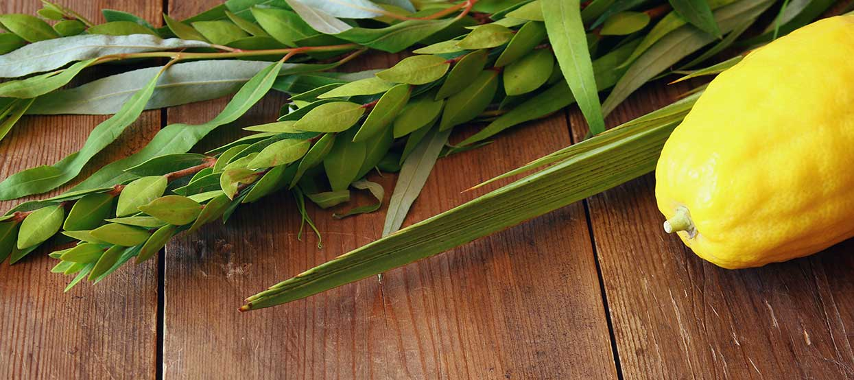 """<a href=""""https://www.tbzbrookline.org/HIGH-HOLIDAYS/SUKKOT#""""                                     target="""""""">                                                                 <span class=""""slider_title"""">                                     Sukkot, Shmini Atzeret, and Simchat Torah                                </span>                                                                 </a>                                                                                                                                                                                       <span class=""""slider_description"""">View a complete schedule of TBZ's offerings this year.</span>                                                                                     <a href=""""https://www.tbzbrookline.org/HIGH-HOLIDAYS/SUKKOT#"""" class=""""slider_link""""                             target="""""""">                             VIEW THE SCHEDULE                            </a>"""