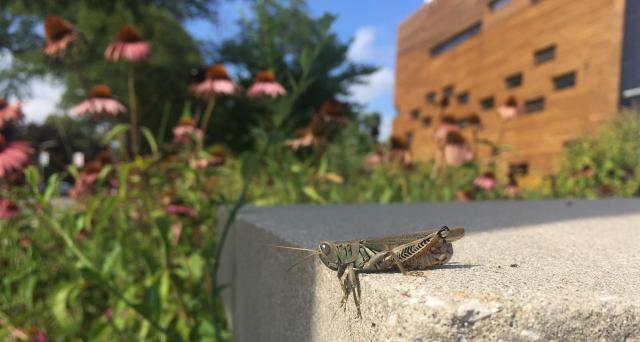 grasshopper_header.jpg