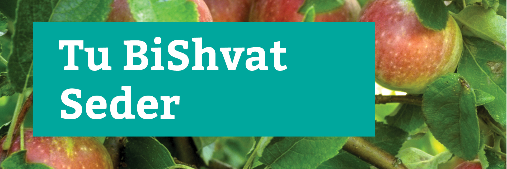 """<a href=""""https://www.congkti.org/event/tu-bi-shvat-seder.html""""                                     target="""""""">                                                                 <span class=""""slider_title"""">                                     Celebrate the Jewish new year of the trees.                                </span>                                                                 </a>                                                                                                                                                                                       <span class=""""slider_description"""">Wednesday, January 27th</span>                                                                                     <a href=""""https://www.congkti.org/event/tu-bi-shvat-seder.html"""" class=""""slider_link""""                             target="""""""">                             Information here...                            </a>"""