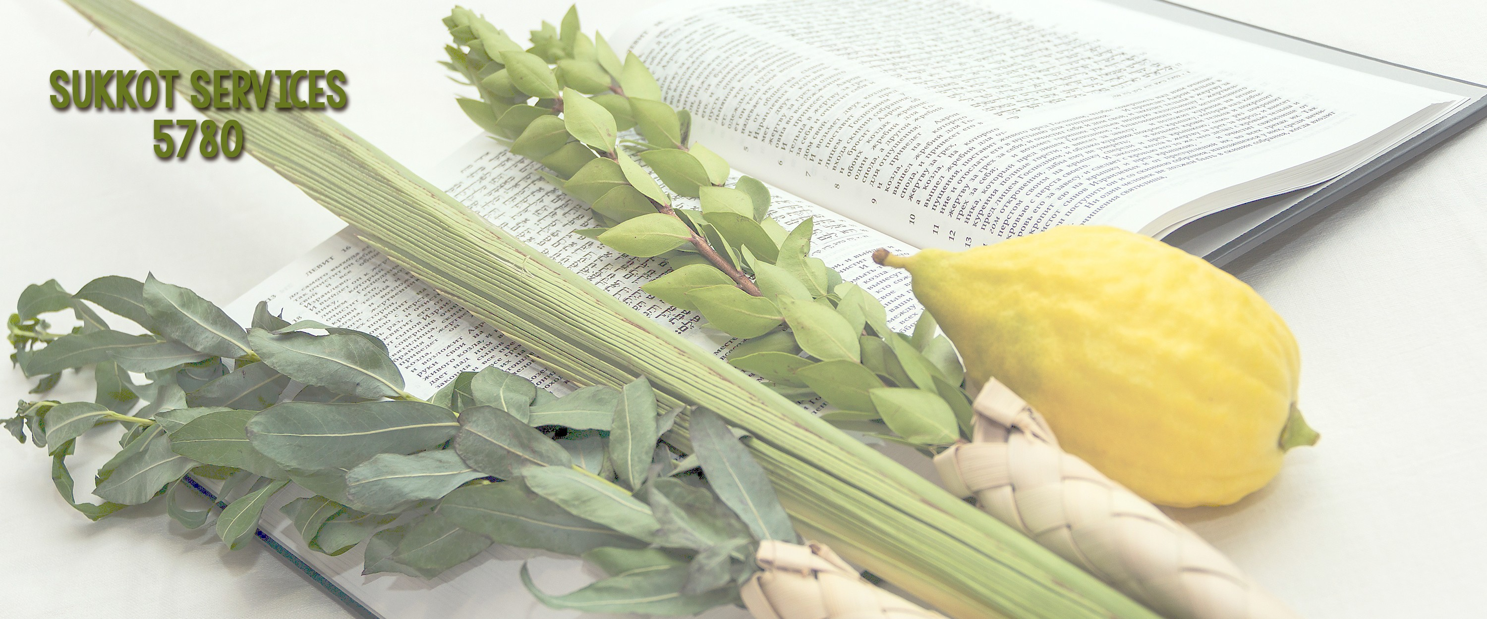 """<a href=""""https://www.bnaitorahct.org/sukkot_5780""""                                     target="""""""">                                                                 <span class=""""slider_title"""">                                     Sukkot Services                                </span>                                                                 </a>                                                                                                                                                                                       <span class=""""slider_description"""">Join us for Sukkot services and then a beautiful kiddush after in the Sukkah!</span>                                                                                     <a href=""""https://www.bnaitorahct.org/sukkot_5780"""" class=""""slider_link""""                             target="""""""">                             Learn more                            </a>"""