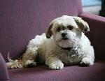 Matzah Brei Rudin (Rabbi Rudin's dog)