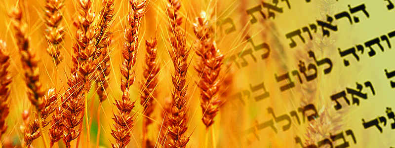 Banner Image for Tikkun Leil Shavuot 5781/2021