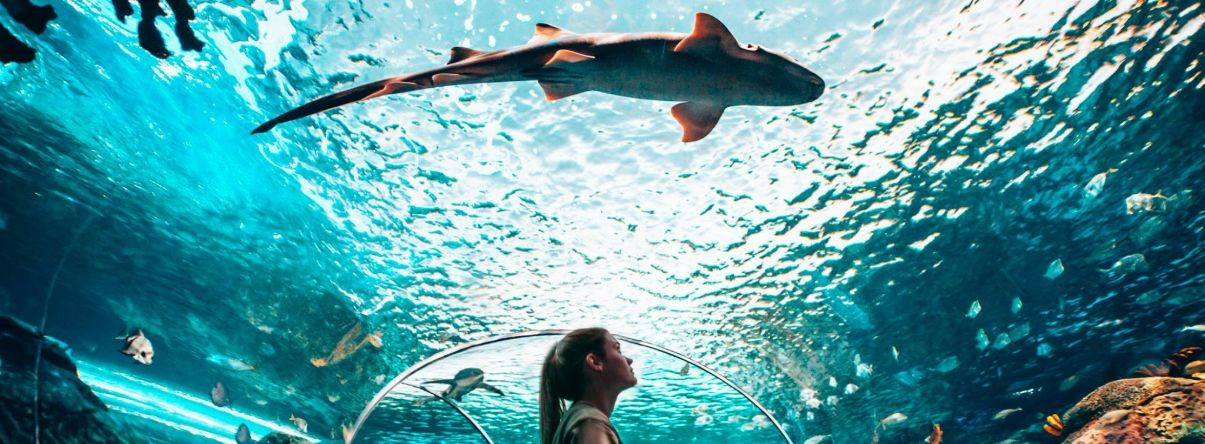"<a href=""www.ripleyaquariums.com/canada""                                     target=""_blank"">                                                                 <span class=""slider_title"">                                     Ripley's Aquarium                                </span>                                                                 </a>                                                                                                                                                                                       <span class=""slider_description"">Canada's largest aquarium.</span>                                                                                     <a href=""www.ripleyaquariums.com/canada"" class=""slider_link""                             target=""_blank"">                             www.ripleyaquariums.com/canada                            </a>"