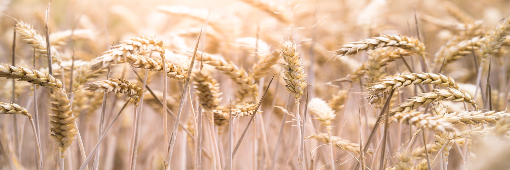"""<a href=""""https://www.bethjacobvt.org/celebrate-shavuot.html#""""                                     target="""""""">                                                                 <span class=""""slider_title"""">                                     Celebrate Shavuot!                                </span>                                                                 </a>                                                                                                                                                                                       <span class=""""slider_description"""">There are many ways to celebrate Shavuot with Beth Jacob Synagogue this year including both in person and zoom options– join us!</span>                                                                                     <a href=""""https://www.bethjacobvt.org/celebrate-shavuot.html#"""" class=""""slider_link""""                             target="""""""">                             Learn more                            </a>"""