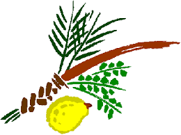 Lulav Png